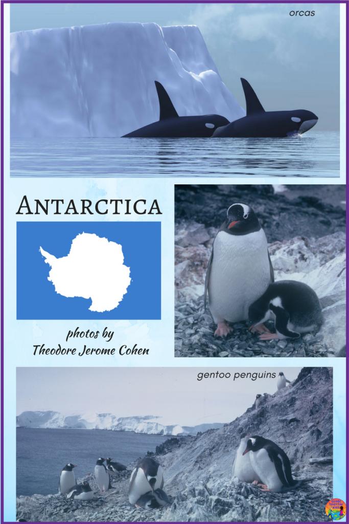 Antarctica photos - Cohen