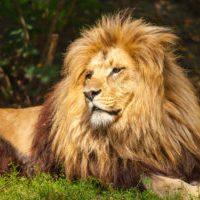 United Kingdom - Lion
