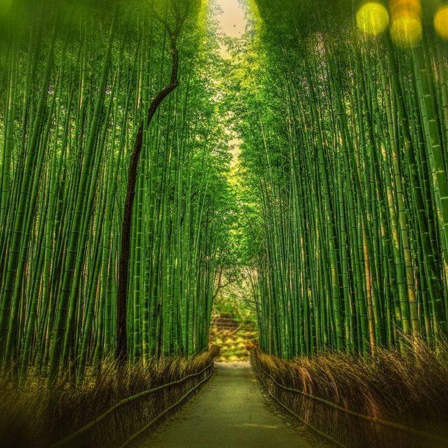 kyoto-1860521_1280
