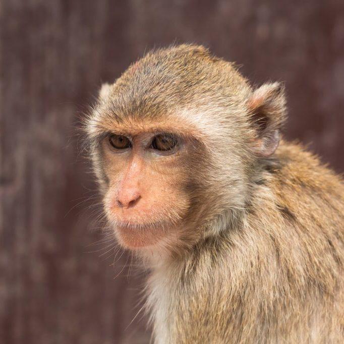 monkey-1609782_1280
