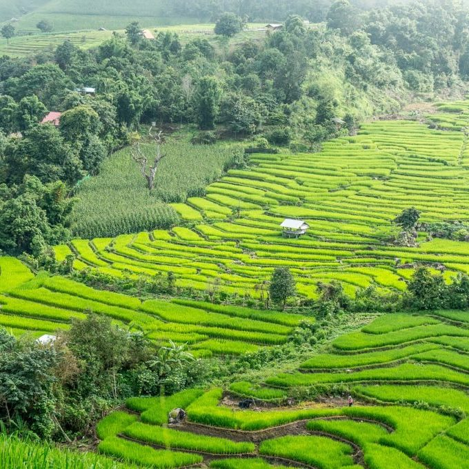 rice-terraces